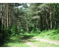 Kleboniskis forest-park